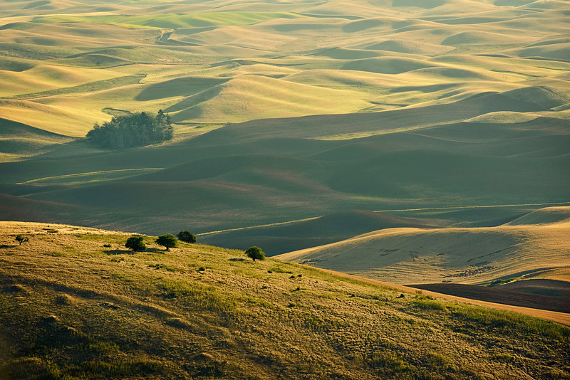 Palouse from the Steptoe Butte
