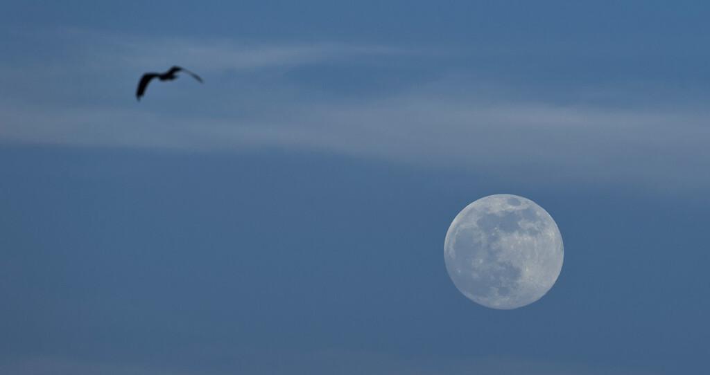 _DLS8597 Super Moon