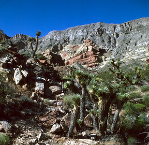 Beaver Dam Mountains, Mohave Desert