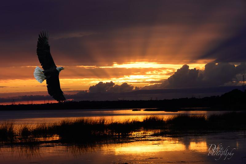 _DLS0765-sunset-Eagle