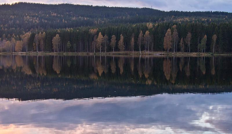 Norwegian Trees 88x62 Black