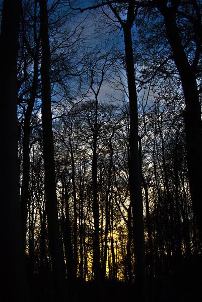 Tree Sunset 67x48 Black