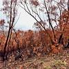 After Bush Fires