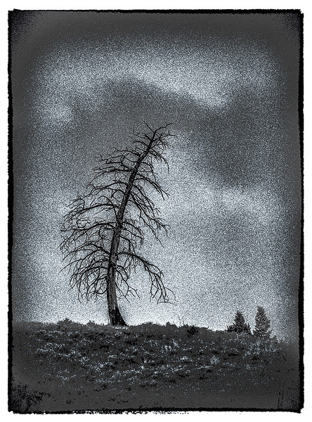 Curved-Tree