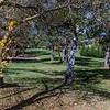 Parkland in Oberon