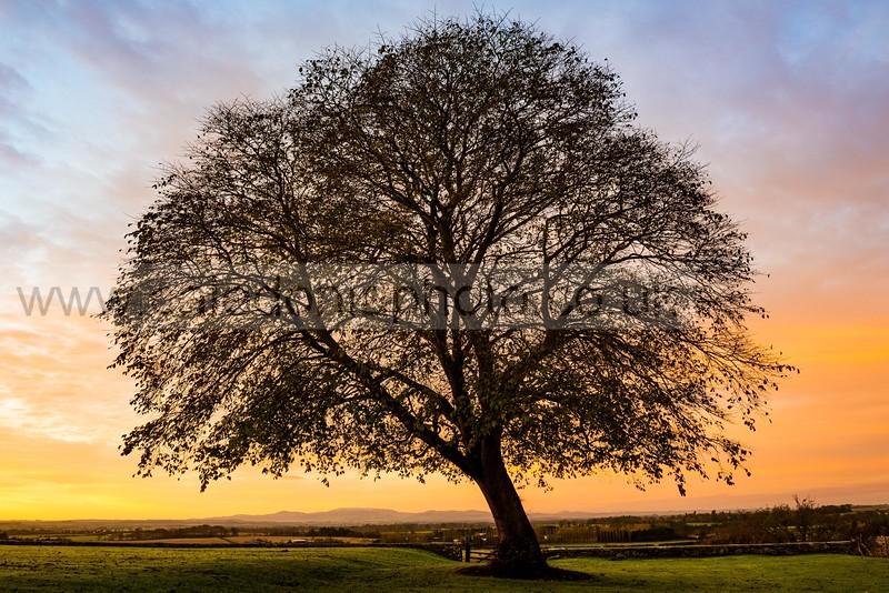 Foulden, Berwickshire