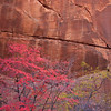 Oak Creek Canyon, Sedona, AZ