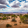 Monsoon Season in the Desert 1