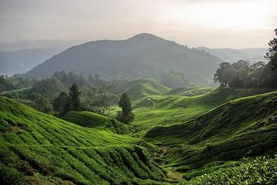 Bharat Tea Plantations, Cameron Highlands, Malaysia