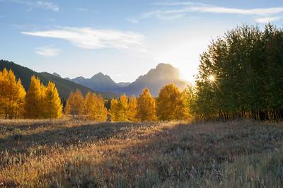 Golden Aspen Sunrise