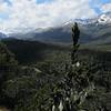 Borland Burn, Fiordland NP, New Zealand