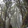 Westcoast Bush, Westland, New Zealand