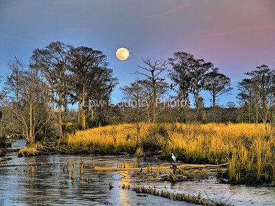 """""""Marsh Moon""""  MCL020 Full Moon Over Marsh This was taken the evening of the largest full moon of the year just as the sun was going down. I had the evening sunset behind me with the moon rising in front of me. A rare opportunity.  This photo won 1st place in 2009, at an event held by The Seacoast Artist Guild of SC in Mt. Pleasant, SC. The event was sponsored by First Federal bank. The Watermark will not show on printed images"""
