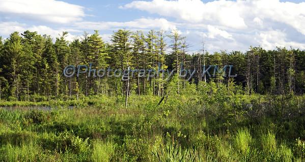 Overgrown Swamp