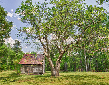An old barn in Rockingham, N.C. in my Aunts back yard. This image was captured near The Cartledge Creek Baptist Church. The Watermark will not show on printed images