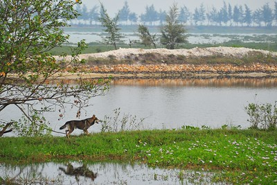 Reflection of a dog, Quan Lan Island, Vietnam