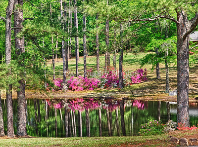 Pretty lake in Rockingham, N.C. with flowers in bloom The Watermark will not show on printed images