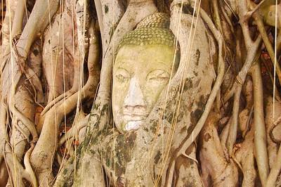 Buddha head, Ayuthaya, Thailand