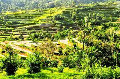 Rice Terrace, Bali, Indonesia