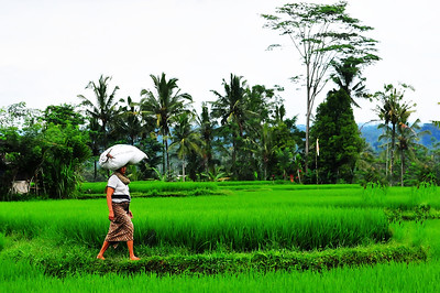 Woman at rice field, Bali, Indonesia
