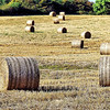 Haybales near Portaferry, County Down