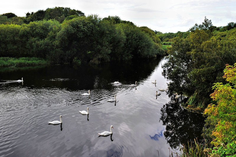 Quoile River near Downpatrick.<br /> Tuesday, 1st September 2015
