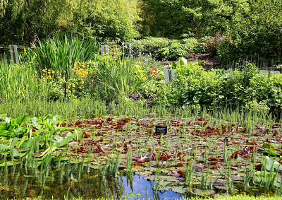 Botanic Gardens_7