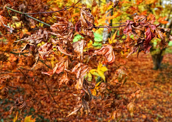 JFK_Arboretum_5191