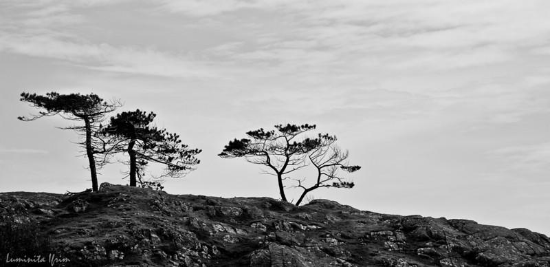 Luskentyre Beach - Traigh Losgaintir