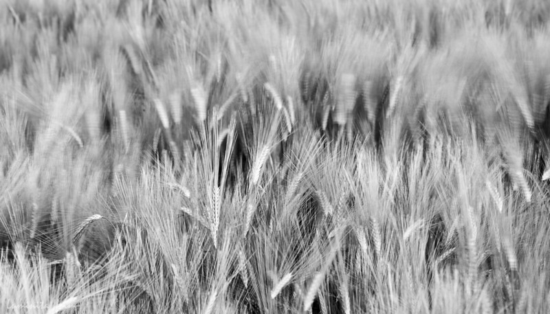 Of Crops and Wind