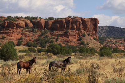 Two Quarter horses in the canyon country - South of La Junta