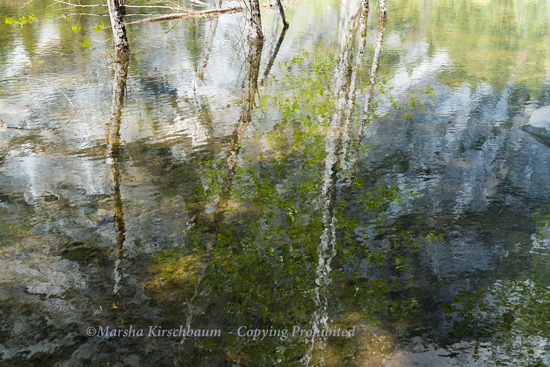 Reflections on a Spring Day