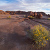 After the Rain - Goblin Valley State Park
