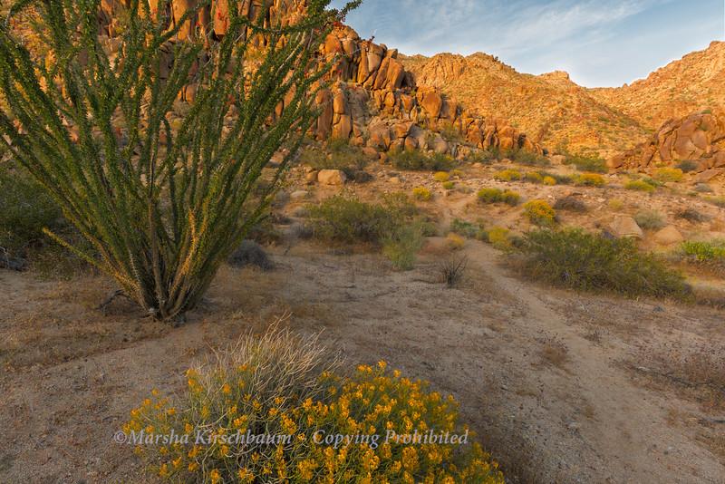 Sunset on Box Canyon Road - Joshua Tree NP