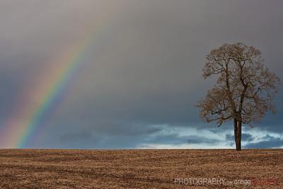Rainbow near Silver Falls State Park