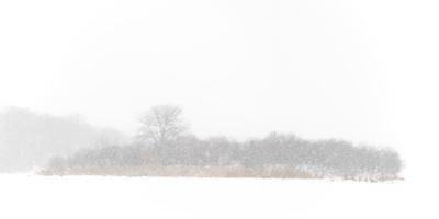 Duck Island in a Blizzard - Fox River in Batavia, Illinois.