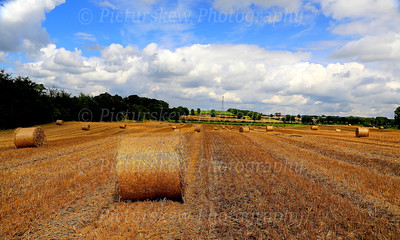 Barley Bales, Hillsborough