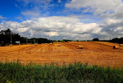 Fields of Gold Hillsborough, Co Down