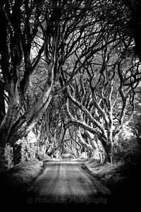 Dark Hedges BW Contrast