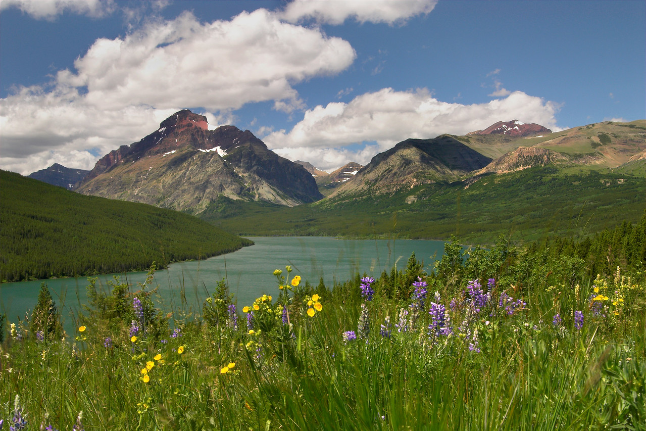 Wildflowers, Glacier National Park.