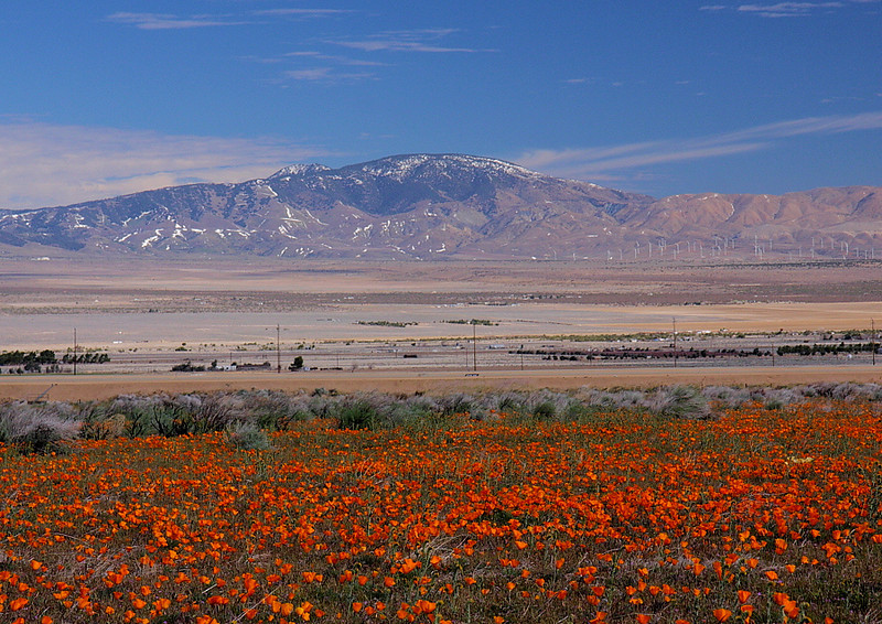 Antelope Valley field of poppies, intersection of Lancaster Road and Highway 138, March 22 2012.
