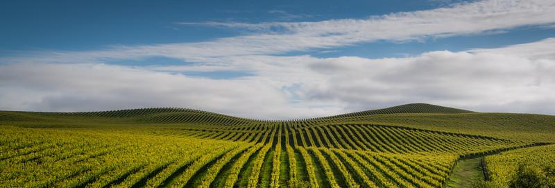 Cotati Grade Vineyard