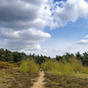 Esher Common, April