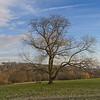 Hampstead Heath, December