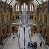 Natural History Museum, October
