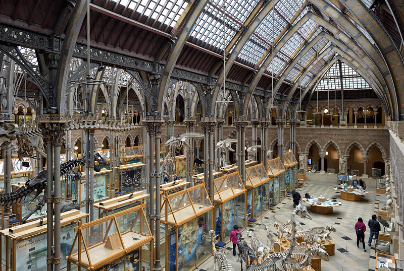 Oxford University Museum of Natural History, April