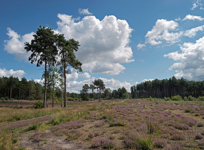 Esher Common, August