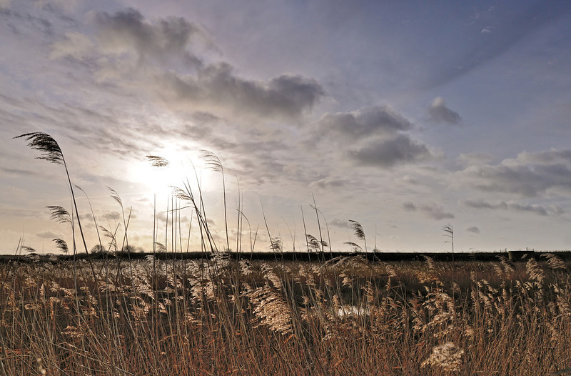 Rainham Marshes, December