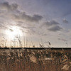 Rainham Marshes, December