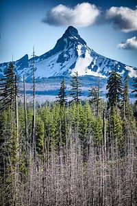Mount Washington Growth